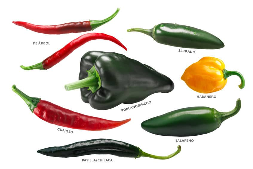 Mexican chile pepper identification, 7 different chile peppers