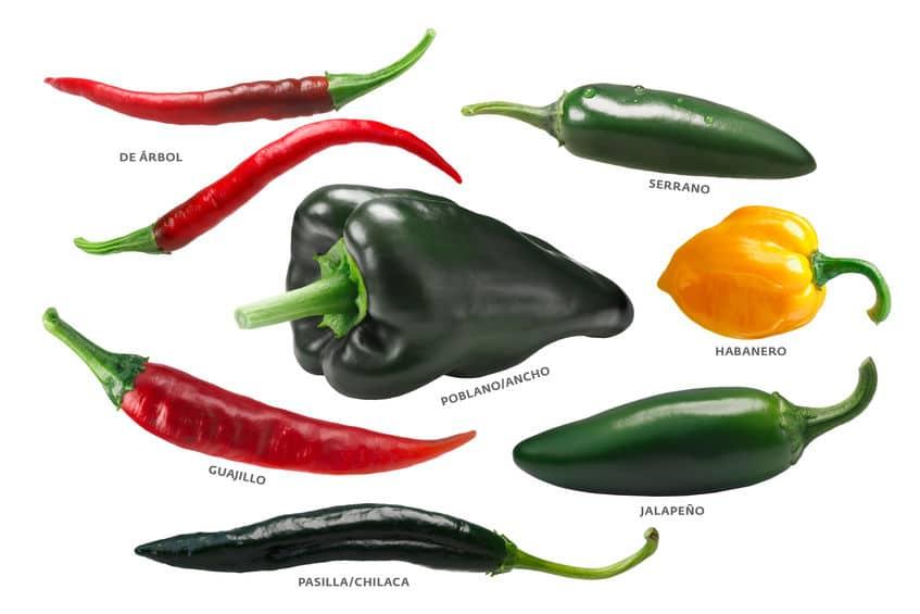 24Bite: Mexican chile peppers: Arbol, Pasilla, Guajillo, Poblano, Habanero, Jalapeno by Maxim Tatarinov via 123rf.com
