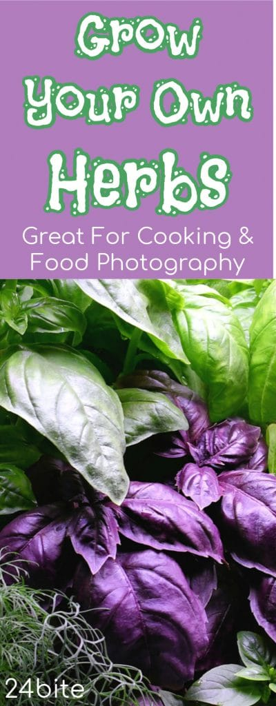 24Bite: Growing Your Own Herbs for Cooking and Food Photography