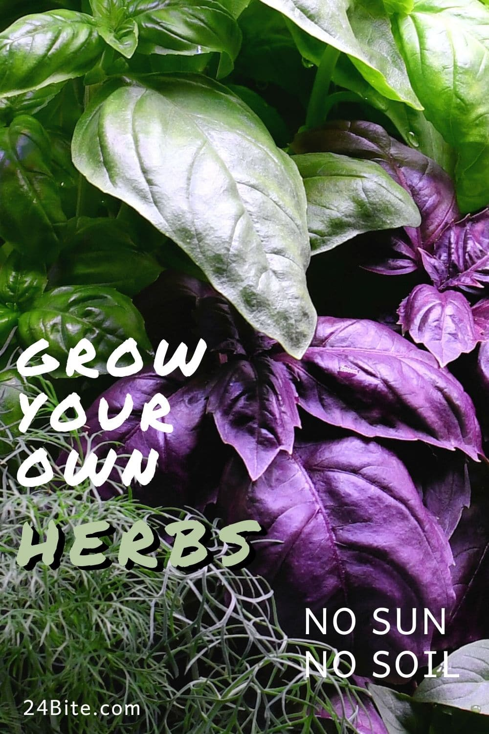 24Bite: Growing Your Own Herbs for Food Photography with Homemade Meat Sauce