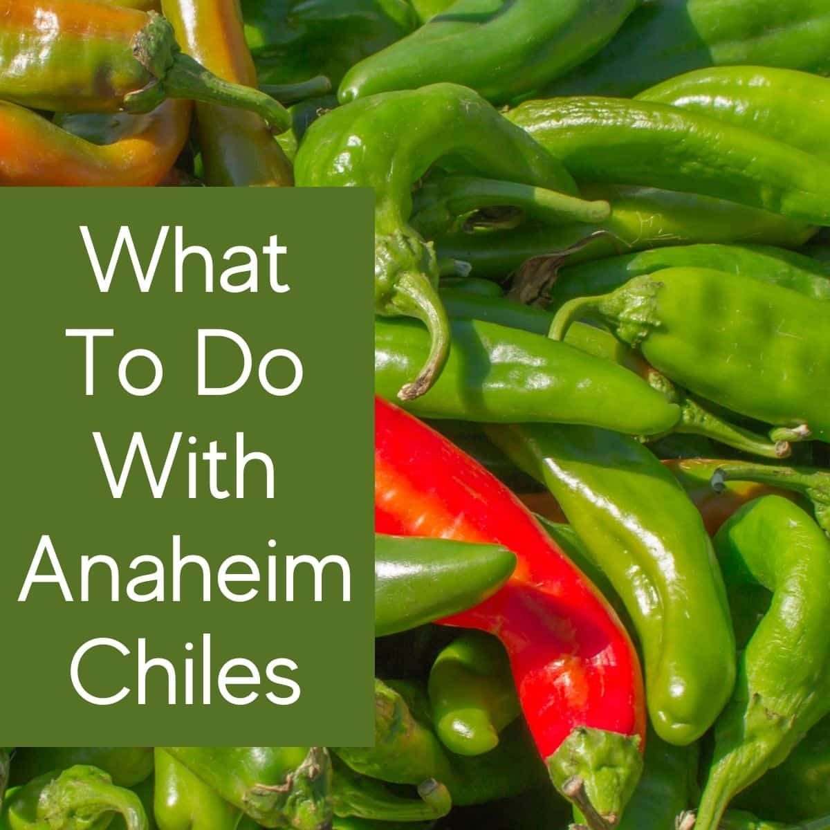 What To Do With Anaheim Peppers